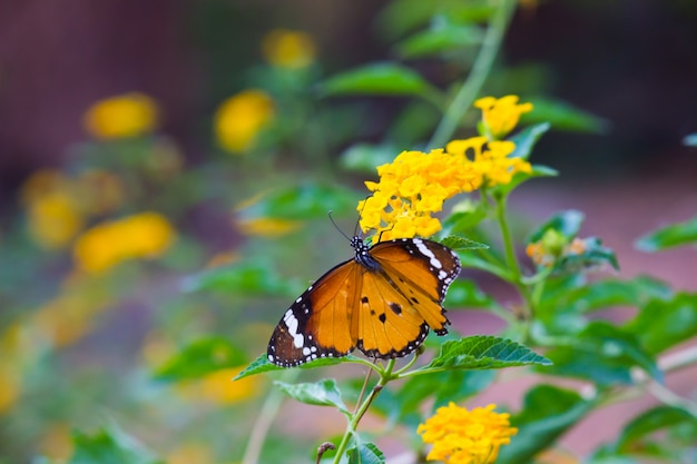 Vlinder op de bloemplant Premium Foto