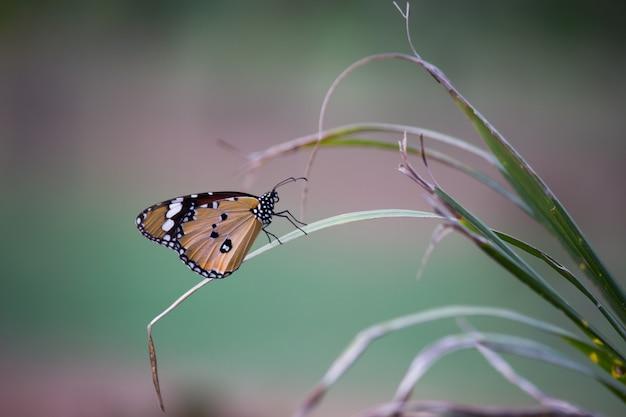Vlinder op de plant Premium Foto