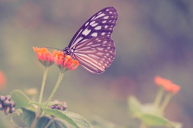 Vlinder op een bloem Gratis Foto