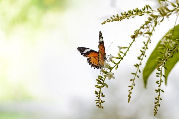 Vlinder op een groene bloemboeket en exemplaarruimte Premium Foto