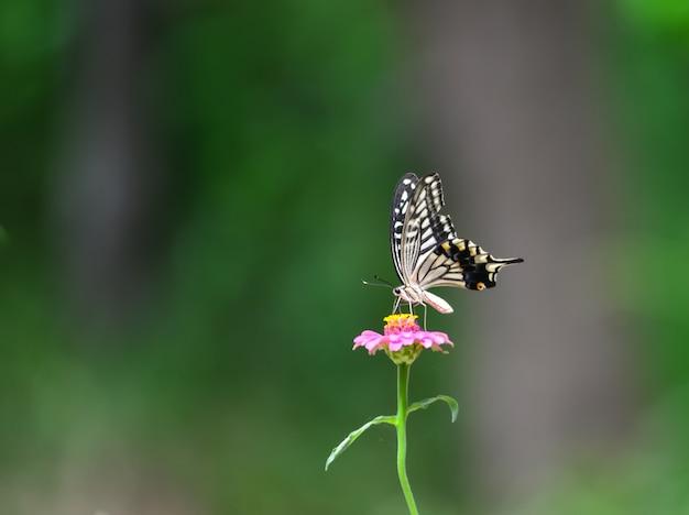 Vlinder op een roze bloem Gratis Foto