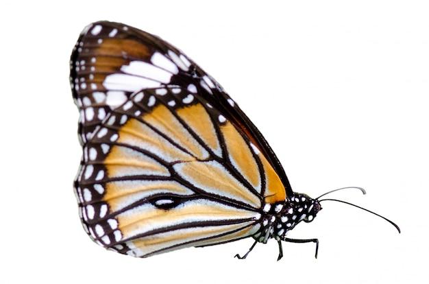 Vlinder vlekken oranje geel witte achtergrond isoleren Premium Foto