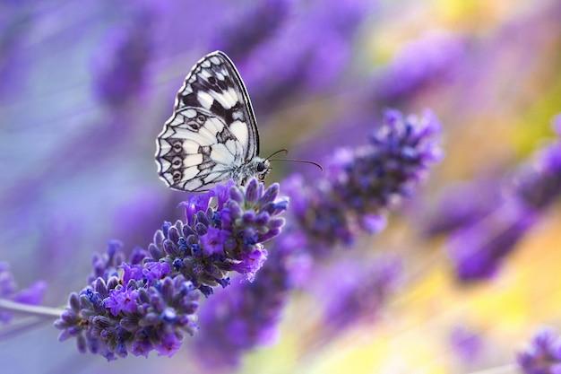 Vlinder zittend op een paarse bloem Gratis Foto