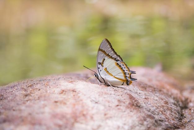 Vlinder Gratis Foto