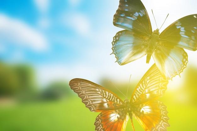 Vlinders bij zonsondergang Gratis Foto