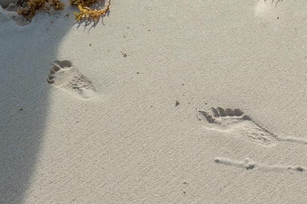 Voetafdruk in het zand. nat zand met voetafdrukken. strandvakanties Premium Foto