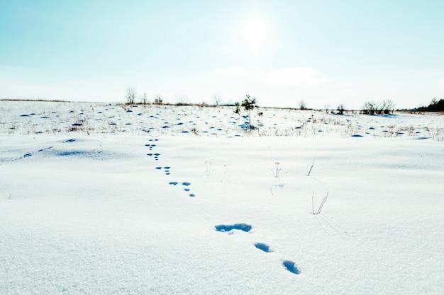 Voetafdrukken in het sneeuwlandschap met blauwe hemel Gratis Foto