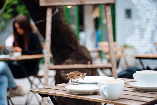 Vogel in de stad. mus zittend op tafel in terras Gratis Foto
