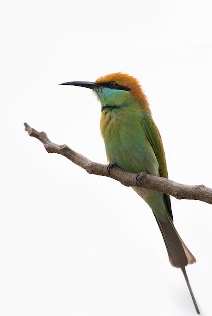 Vogel op een tak Premium Foto