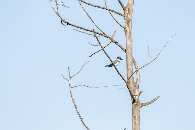 Vogel staande op de boomtak met een blauwe lucht op de achtergrond Gratis Foto