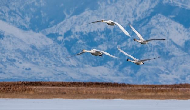 Vogels die over een meer vliegen Gratis Foto