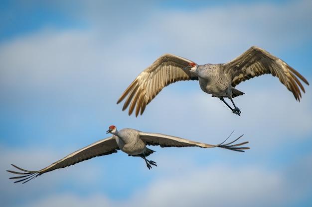 Vogels vliegen in de lucht Gratis Foto
