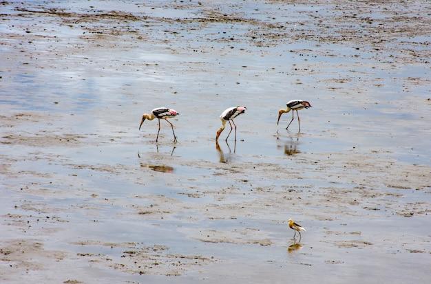 Vogels voeden in de zee bij bang poo, samut prakan. Premium Foto