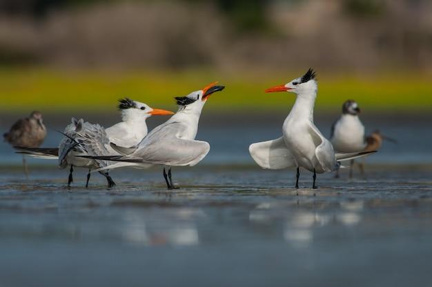 Vogels zittend op ijs Gratis Foto