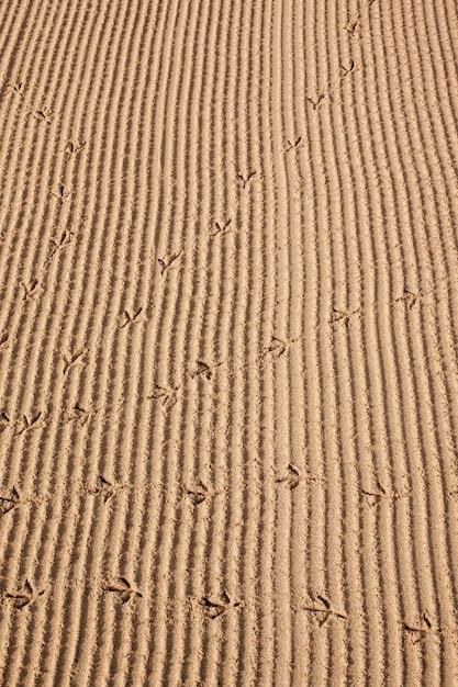 Vogelsporen in het zand op de strandachtergrond Premium Foto
