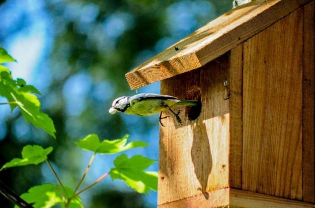 Vogeltje in de vlucht Gratis Foto