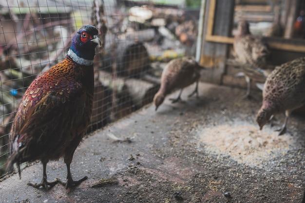 Vogelzitting bij voedsel in kooi Gratis Foto