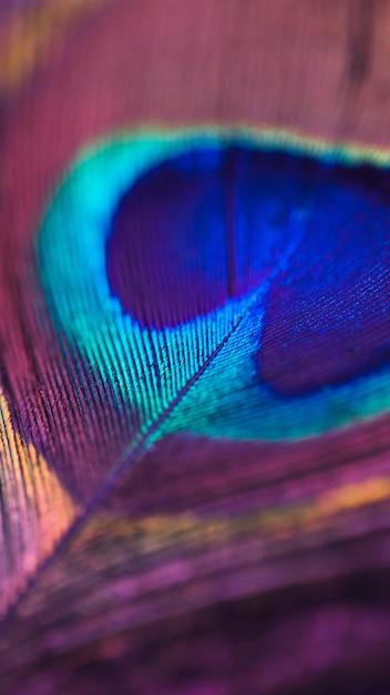 Volledig frame van kleurrijke glanzende pauwenveer oppervlak Gratis Foto