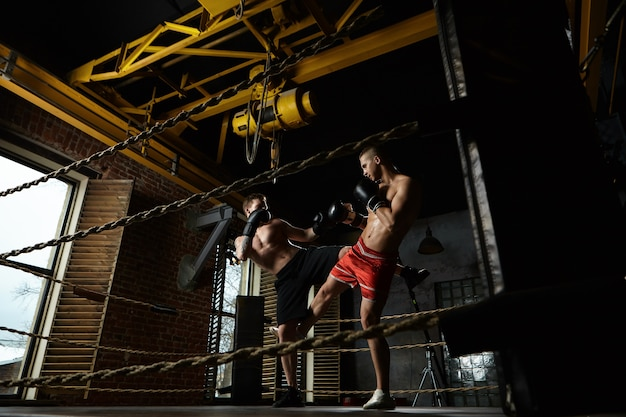 Volledig lengteportret van twee mannelijke kickboksers die binnen boksring in moderne gymnastiek sparren: man in zwarte broek die zijn tegenstander in rode borrels schopt. opleiding, training, vechtsporten en kickboksen concept Gratis Foto