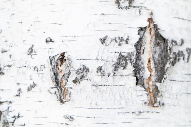 Volledige frame textuur van witte berkenschors. berk textuur achtergrond. Premium Foto