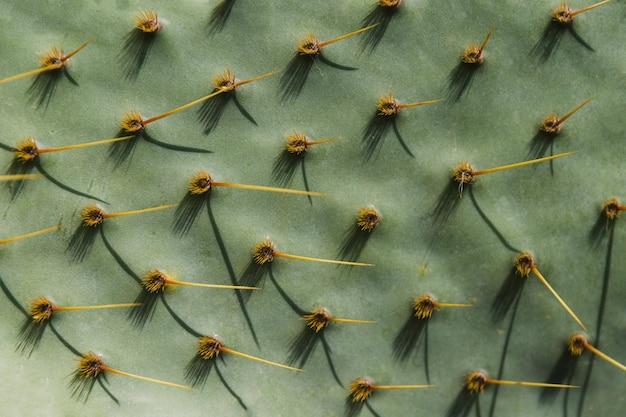 Volledige frame van groene cactus oppervlak met puntige doornen Gratis Foto