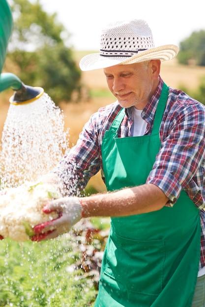 Volwassen man die verse groente op gebied schoonmaakt Gratis Foto