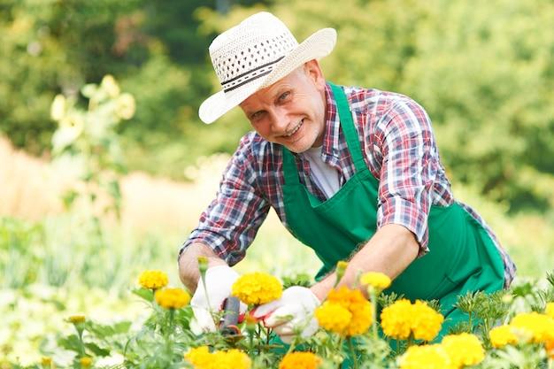 Volwassen man snijden bloem in de tuin Gratis Foto