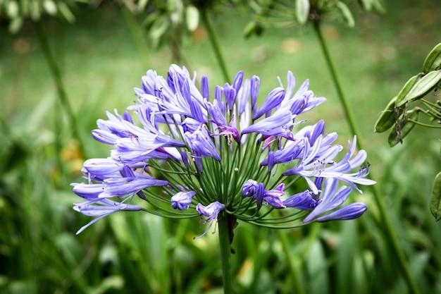 Vooraanzicht blauwe tropische bloem met vage achtergrond Gratis Foto