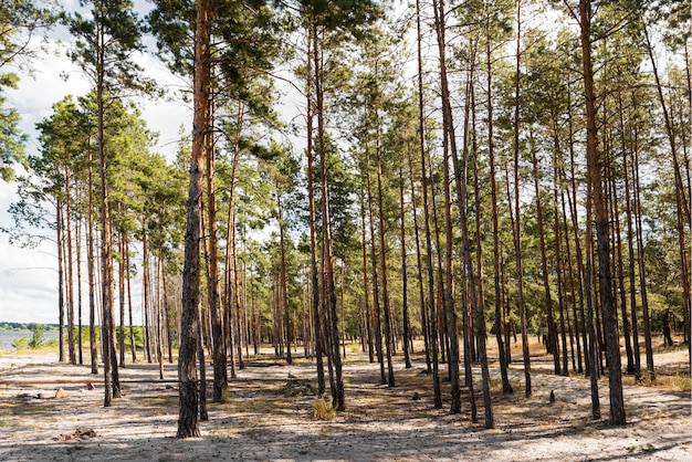 Vooraanzicht bomen bij daglicht Premium Foto