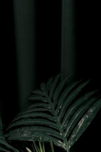 Vooraanzicht palmboom bladeren Gratis Foto