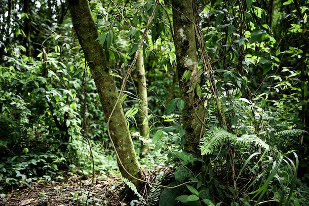 Vooraanzicht prachtig tropisch bos Gratis Foto