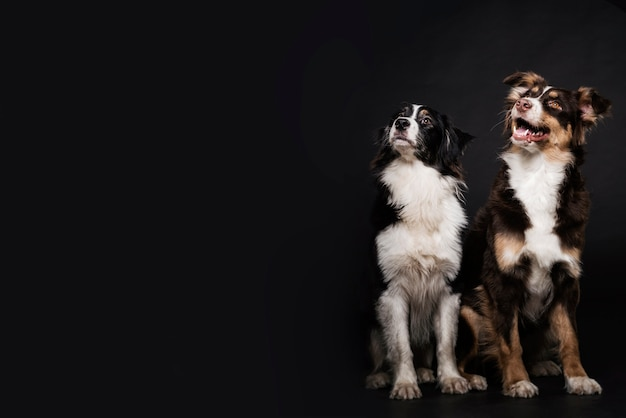 Vooraanzicht schattige honden Gratis Foto
