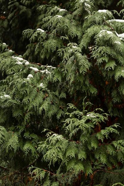 Vooraanzicht van groene plant met sneeuw Gratis Foto