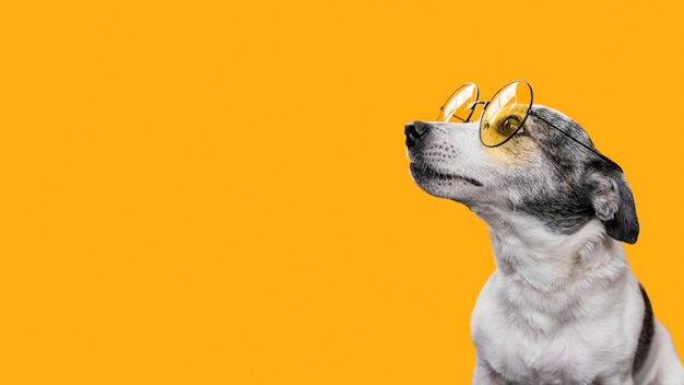 Vooraanzicht van mooie hond met exemplaarruimte Gratis Foto