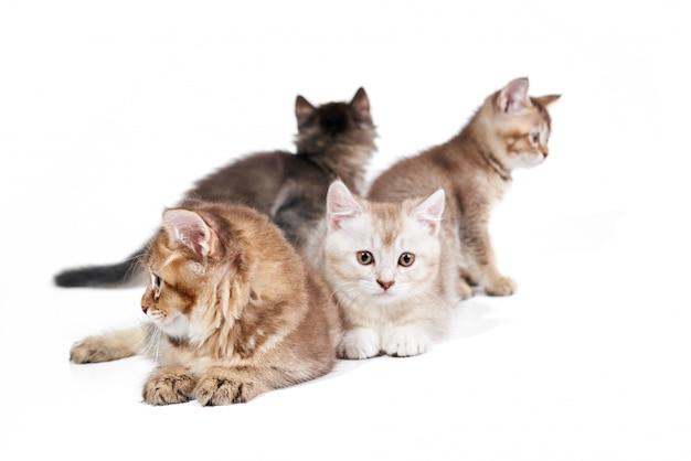 Vooraanzicht van vier kittens. Premium Foto