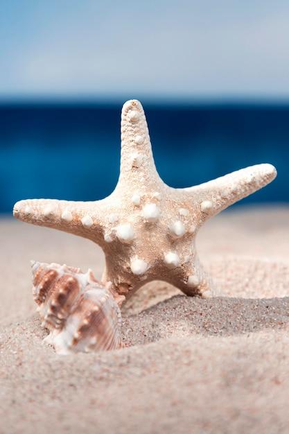 Vooraanzicht van zeester en zee schelp in strand zand Premium Foto