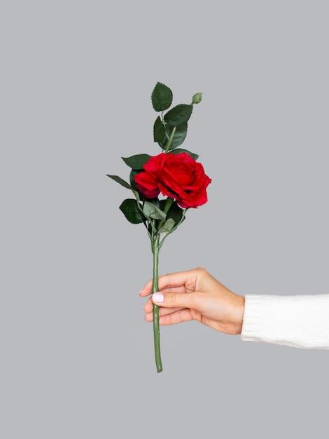 Vooraanzicht vrouw met rode roos Gratis Foto