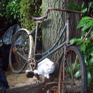 Vooroorlogse somme bicyclette - somme-cyclus w, draad Gratis Foto