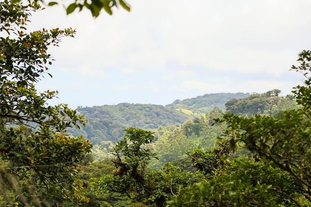 Vreedzaam tropisch regenwoudmening van costa rica Gratis Foto