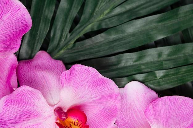 Vrij roze orchidee en tropische bladeren Gratis Foto