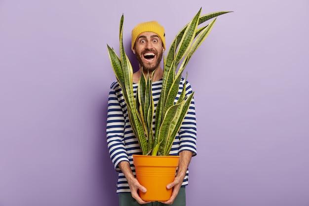 Vrolijke mannelijke plantenliefhebber geeft om decoratieve huisbloem, houdt pot met sansevieria vast Gratis Foto