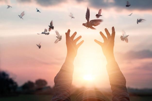Vrouw bidden en vrije vogel die van aard op zonsondergangachtergrond genieten, hoopconcept Premium Foto