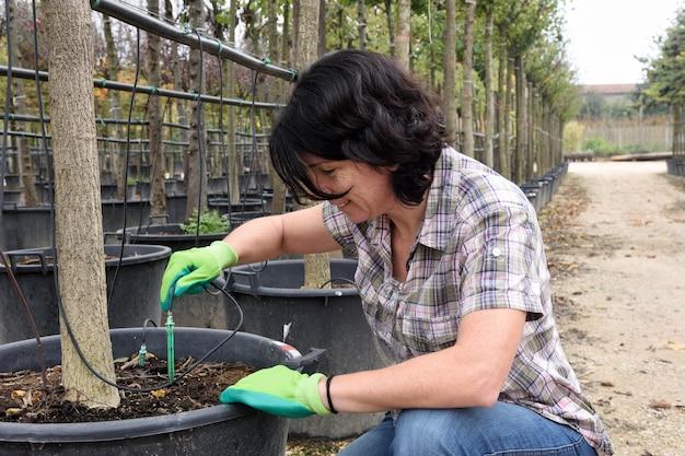 Vrouw die een druppelbevloeiing in een het tuinieren centrum voorbereidt Premium Foto