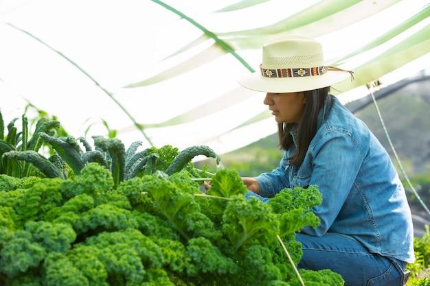 Vrouw die groenten verzamelt Premium Foto
