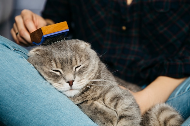 Vrouw die slapende kat kamt Gratis Foto