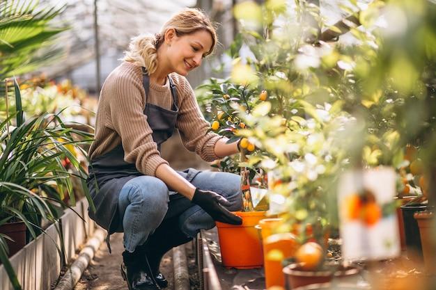 Vrouw die voor planten in een serre zorgen Gratis Foto
