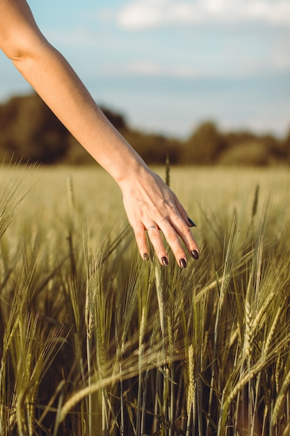 Vrouw hand touch jonge tarwe oren bij zonsondergang of zonsopgang. landelijk en natuurlijk landschap. 1 Premium Foto
