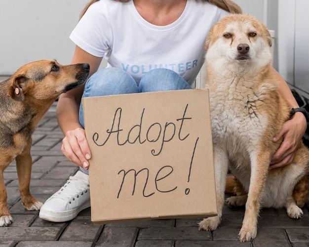 Vrouw met adopteer me teken terwijl je naast schattige honden zit Gratis Foto