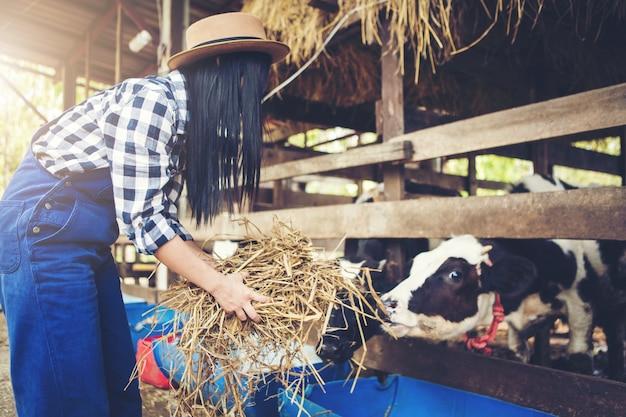 Vrouw of boer met en koeien in stal op melkveebedrijf-boeren Premium Foto