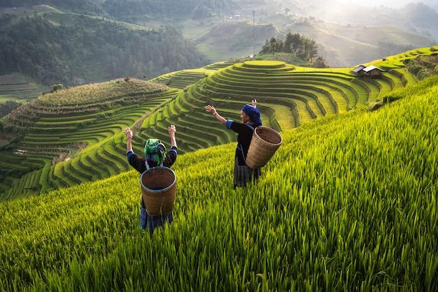 Vrouw op rijst terrasvormig gebied in vietnam Premium Foto